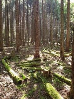 森の写真・画像素材[4886397]