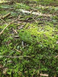 森こけの写真・画像素材[4886762]