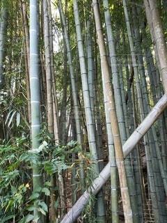 竹やぶの写真・画像素材[4886901]