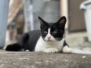 実家の野良猫の写真・画像素材[4873803]