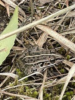 木の表面に座っているカエルの写真・画像素材[4874017]