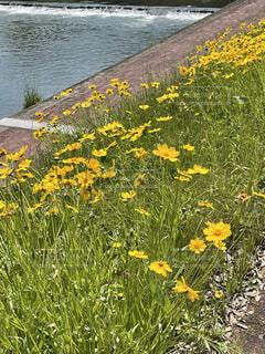 花のクローズアップの写真・画像素材[4874022]
