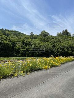 道路の真ん中にある木の写真・画像素材[4874025]