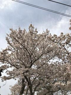 木のクローズアップの写真・画像素材[4874026]