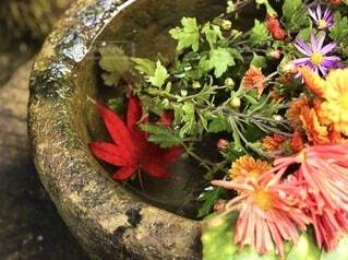 水に浸った切花、紅葉の写真・画像素材[4874550]