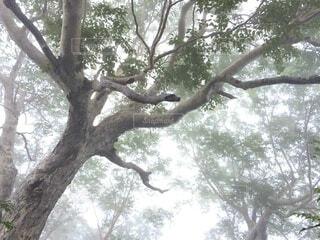 もやがかかった森林の写真・画像素材[4875638]