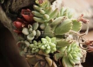 色んな多肉植物の写真・画像素材[4876199]