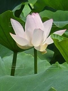 緑の植物の写真・画像素材[4874156]