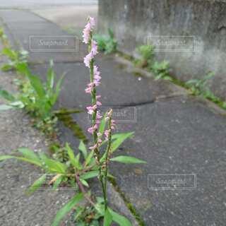 路上の花の写真・画像素材[4874331]