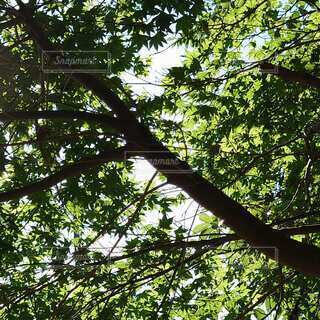 木漏れ日の写真・画像素材[4874348]
