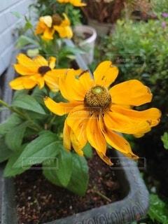 黄色の花02の写真・画像素材[4874483]