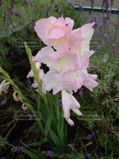ピンクの花02の写真・画像素材[4874482]
