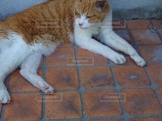 横たわる猫01の写真・画像素材[4874489]