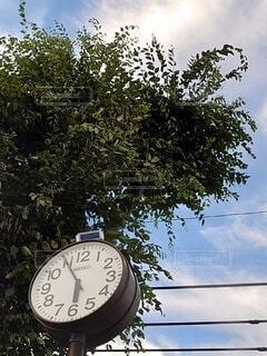 時計と樹木2の写真・画像素材[4879785]