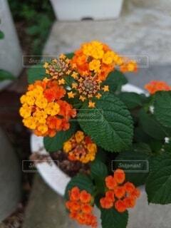 オレンジの花の写真・画像素材[4879789]