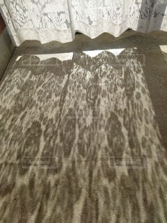 レースカーテンの影の写真・画像素材[4882921]