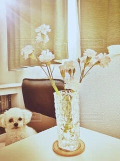 テーブルの上に座っている犬の写真・画像素材[4910832]