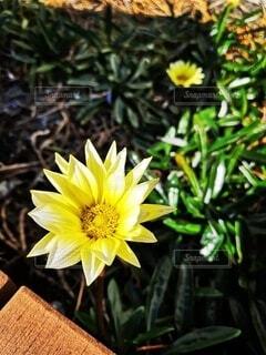花のクローズアップの写真・画像素材[4930788]