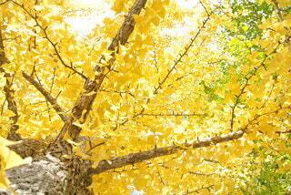 黄金色の空の写真・画像素材[4875728]