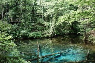 木々に囲まれた水の中の小さなボートの写真・画像素材[4922315]