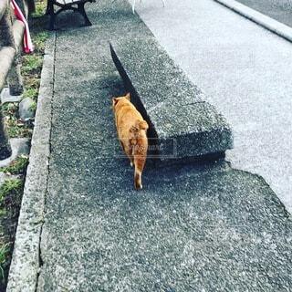 山の上の椅子の猫の写真・画像素材[4877338]