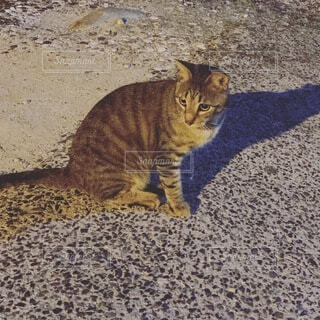 家の近くの猫の写真・画像素材[4877340]