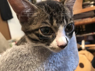 猫のクローズアップの写真・画像素材[4903514]