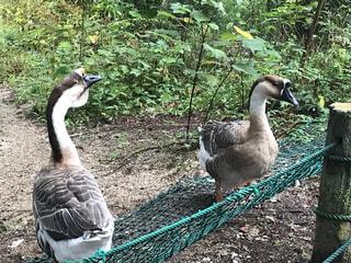 フェンスの前に立っている鳥の写真・画像素材[4922349]