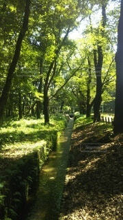 森の中の木の写真・画像素材[4874659]