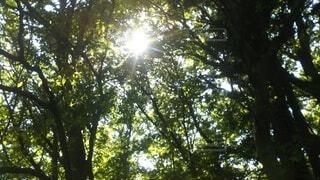 森の中の写真・画像素材[4874662]