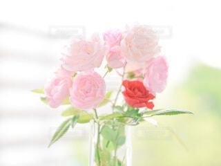 バラの花の写真・画像素材[4875814]