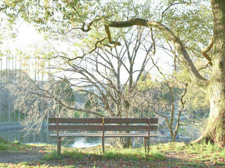 公園のベンチの写真・画像素材[4875824]
