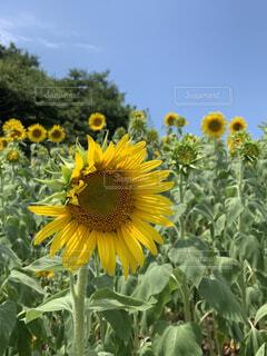 花のクローズアップの写真・画像素材[4881774]