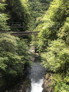 森の中で川を下る列車の写真・画像素材[4874808]