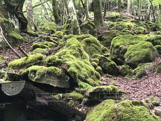 木の隣の岩の近くの写真・画像素材[4874805]