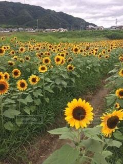 花のクローズアップの写真・画像素材[4874845]