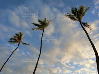 ハワイの空とヤシの木の写真・画像素材[4920551]