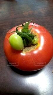 変形トマトの写真・画像素材[4875685]