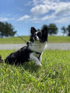 天気の良い日に愛犬と散歩の写真・画像素材[4875478]