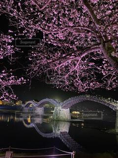 夜桜と錦帯橋の写真・画像素材[4876416]