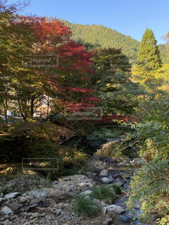 秋の写真・画像素材[4886918]