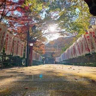 秋の夕方の写真・画像素材[4886940]