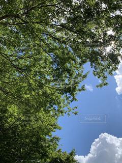 自然あふれる緑と夏の空の写真・画像素材[4876307]