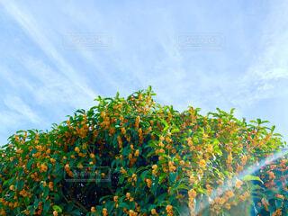 秋といえば、この甘い香り。の写真・画像素材[4898121]