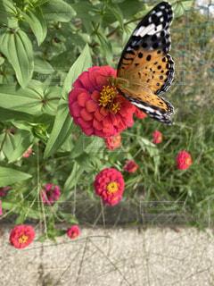 話と蝶々の写真・画像素材[4875589]