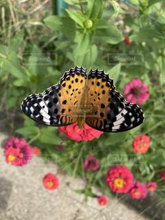 蛾も美しいの写真・画像素材[4875795]