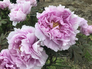 花(複)の写真・画像素材[4875674]
