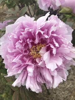 花(庭)の写真・画像素材[4875675]