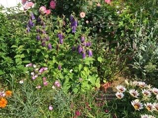 庭の写真・画像素材[4875679]