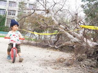 台風で倒れた木を見つめる子供の写真・画像素材[4885098]
